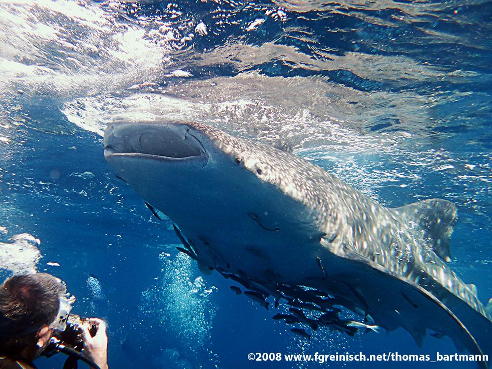 The Wale Shark and Me